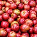 Food-United Dunst-Obst APFEL-WÜRFEL ohne Zuckerzusatz 1x Füllm 4,6KG ATG 4,05KG