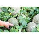 Food-United MELONEN FRUCHT-PÜREE Ponthier 1KG für Melon-du-Quercy Smoothies Müsli uvm.