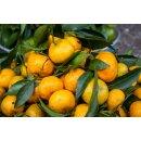 Food-United YUZU PÜREE Japanische Zitrus-Frucht Ponthier 500g Smoothies Müsli