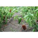 Food-United PAPRIKA PÜREE ROT Gemüse-Püree Ponthier 1KG Smoothies Müsli uvm.